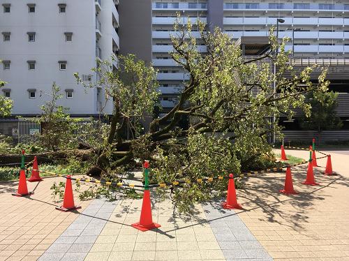 2018-09-05 サンバリエ阪南