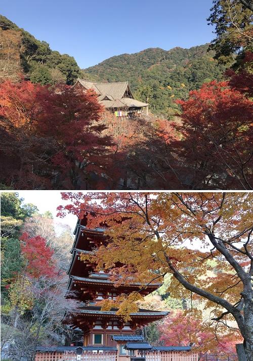 2018-11-27 長谷寺2